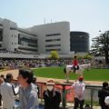 Japan's Mile Championship offers some value bets, and Betcirca looks at the opportunities.